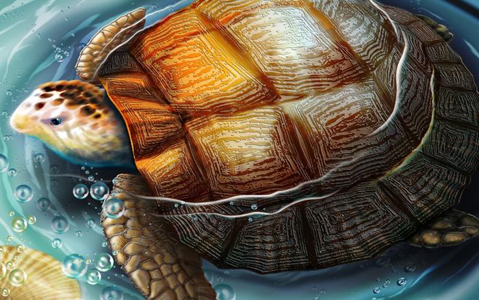Tortoise in Vastu Shastra