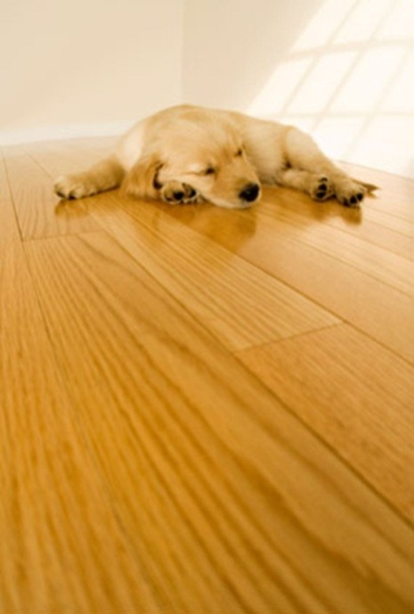 Wood-Floor-Wood-Floor-Cleaning-Clean-Wood-Floor_thumb