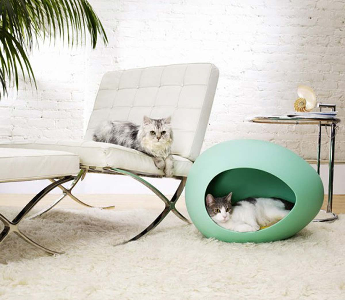 Home Tips For Pet Owners My Decorative