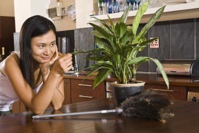 Bug Spray Indoor Plants