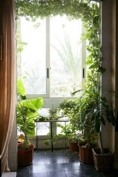 Interior Decorating with Indoor Plants