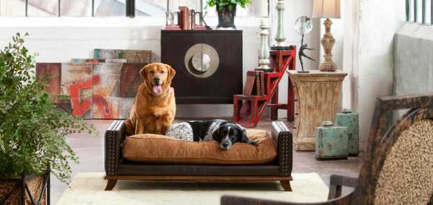 Modern Classic Dog Bed Room
