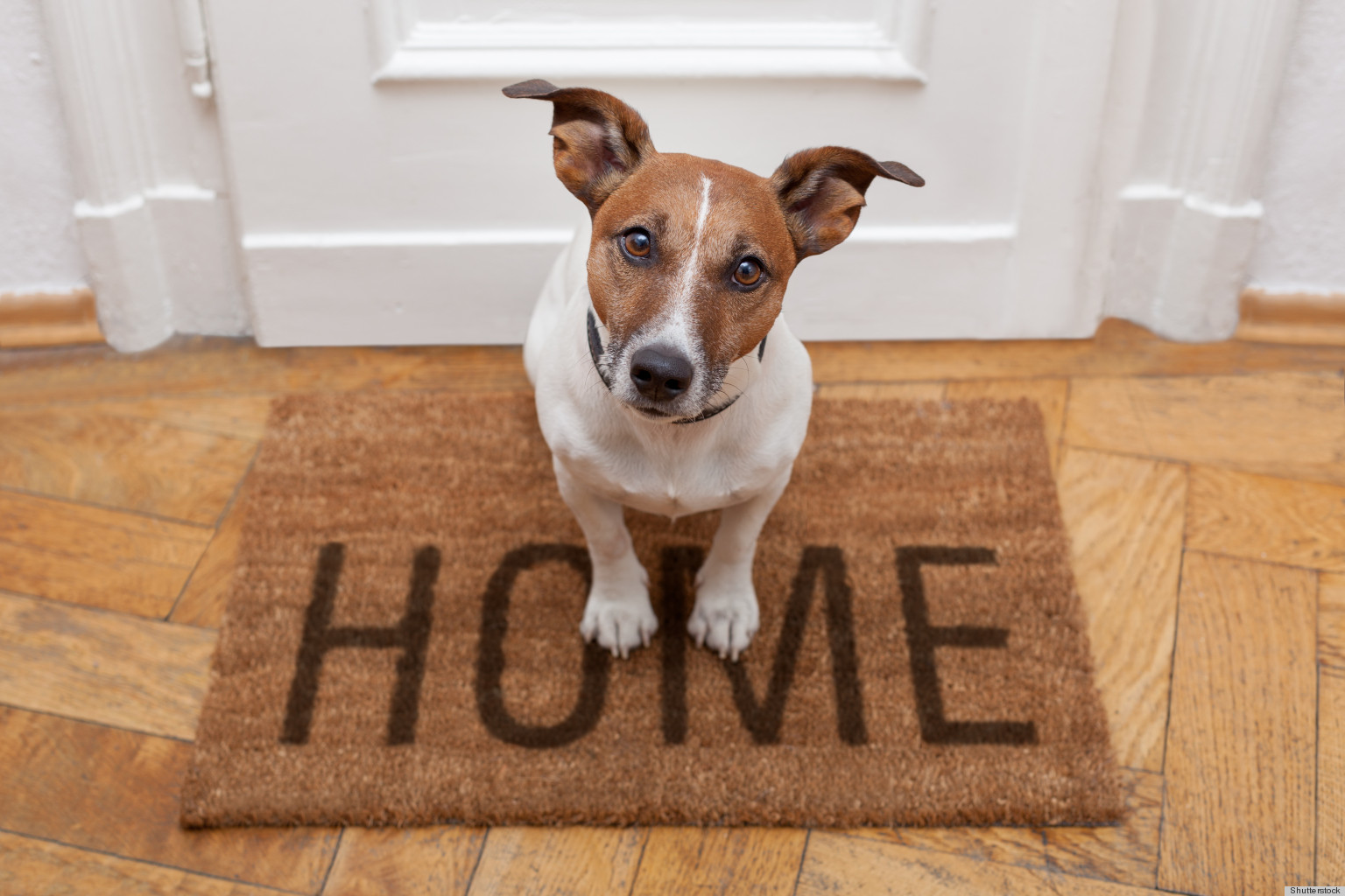 Pet Friendly Home Tips