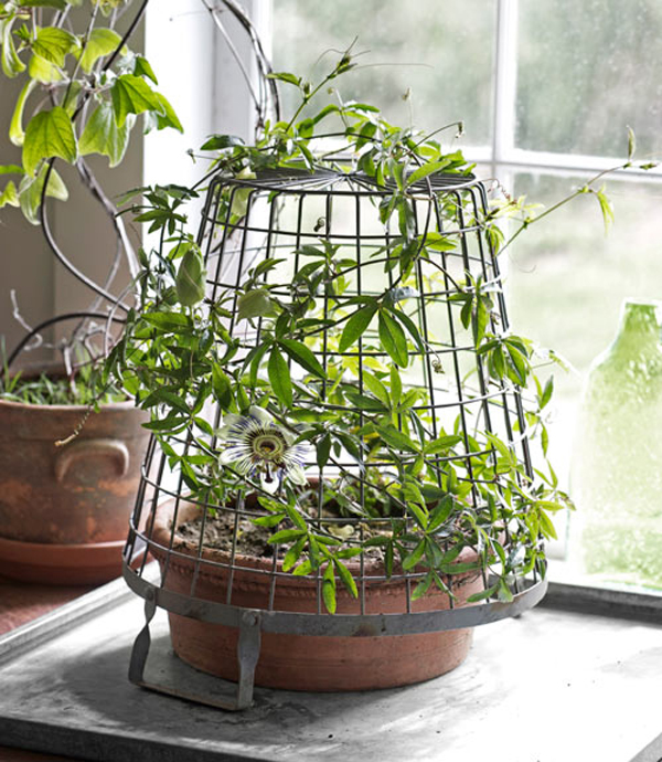 Love Indoor Potted Plants: Tips to Maintain Them | My Decorative