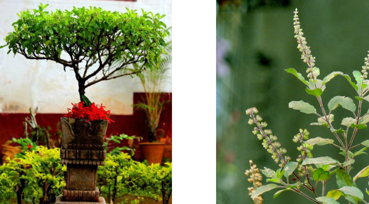 Good luck plants for your home my decorative - Good plants for home ...