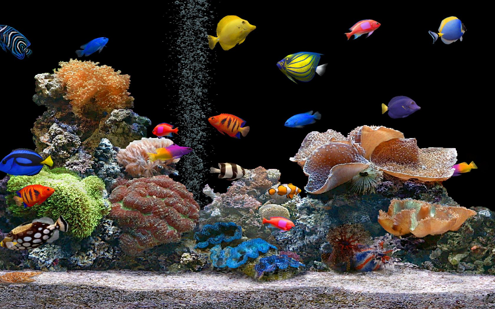 Feng shui tips for location of the fish tank at home my for Feng shui fish tank