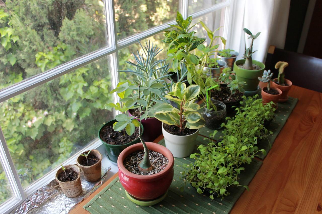 Indoor Home Garden Plants