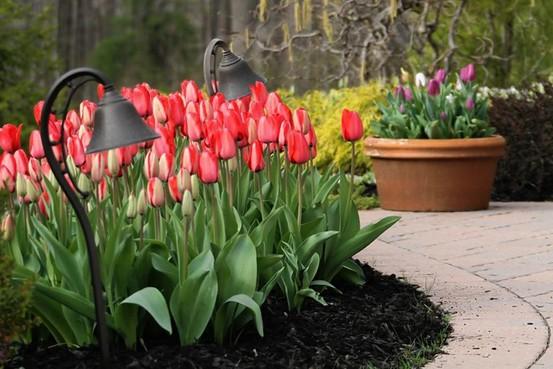 Planting of Flower Bulbs