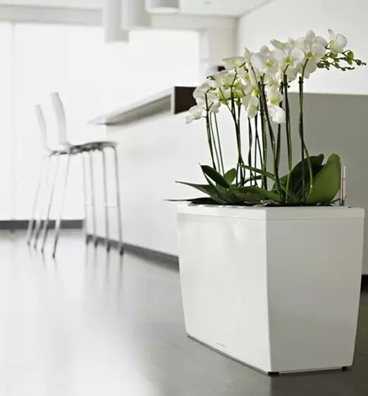 Minimalist-Flower-Pot-house Design indoor garden~01