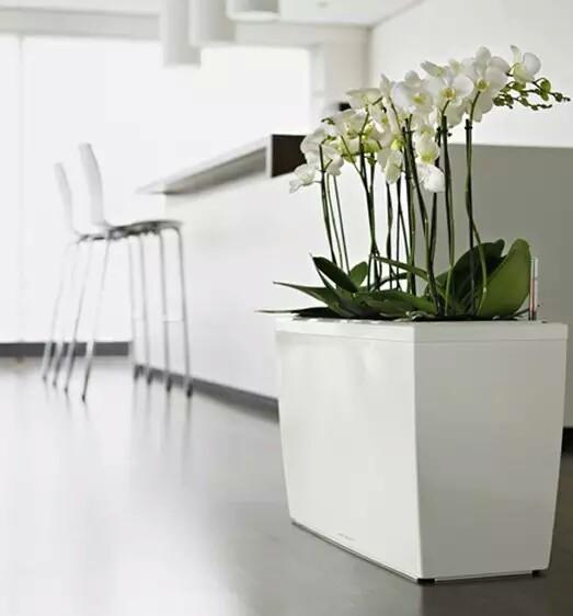 Minimalist Flower Pot House Design Indoor Garden