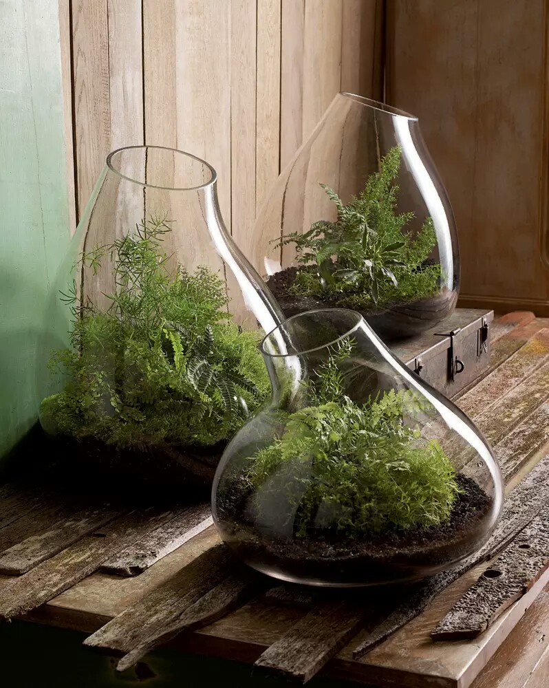 indoor glass pot small garden~01