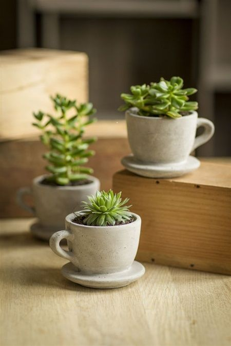 Concrete cup mini pot succulent