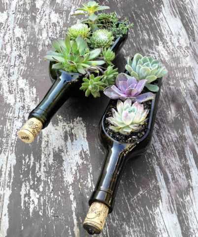 Recycled wine bottle succulent potting