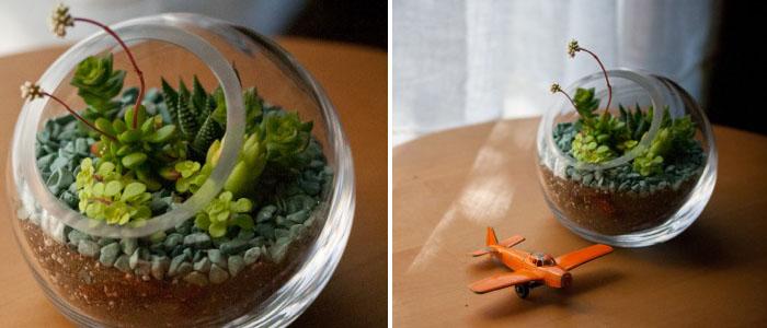 Succulent Small Bias Globe