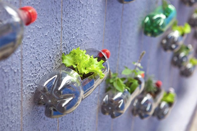 Upcycling Plastic Soda Bottles As An Urban Garden