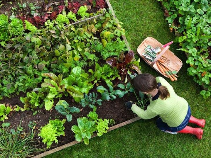Посадить сад своими руками 277