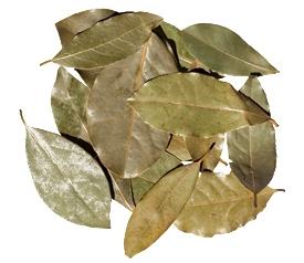 Large Bay Leaf