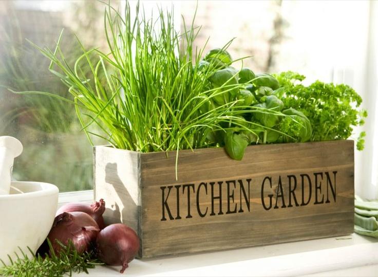 Four Veggies For The Kitchen Garden | My Decorative