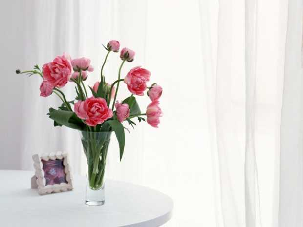 Tulips Flowers Bouquet Vase Table Curtains Frame