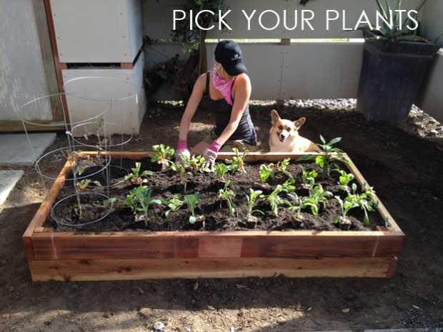 Pick Your Plants