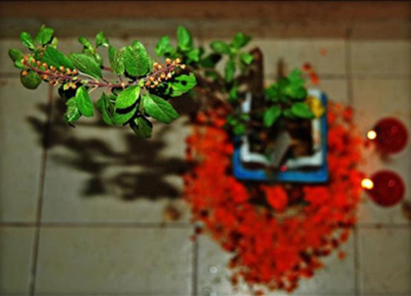 Tulsi Puja