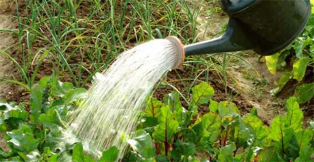 Watering in Garden