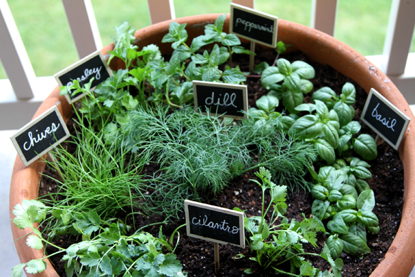 Beautiful small indoor garden for herbs