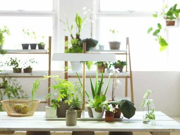 Container Plants For Indoor Modern Interiors