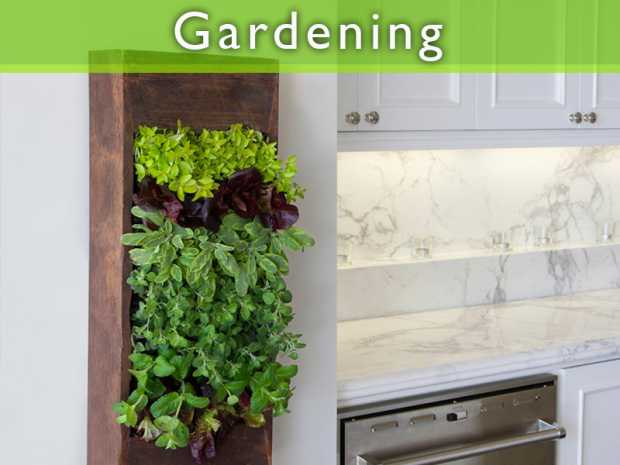 Grow Your Own Small Salad Garden featured