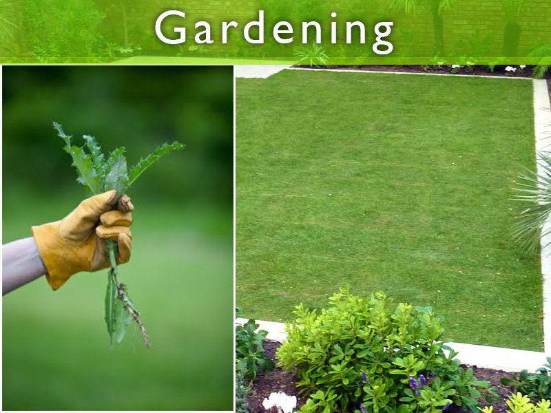 Keeping your garden Weed Free featured