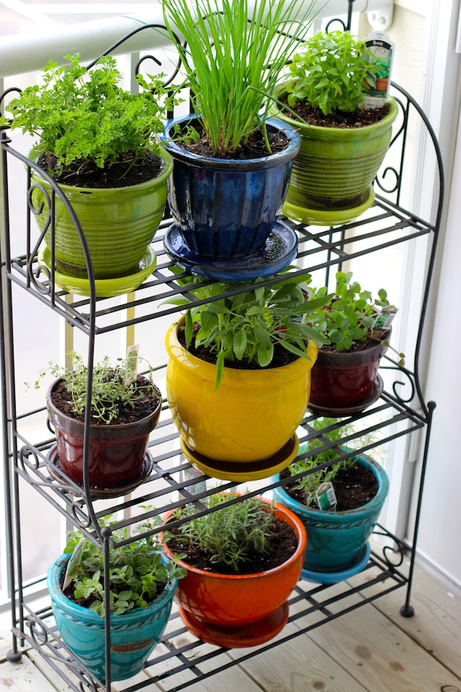 Mini indoor container garden for vegetables and herbs