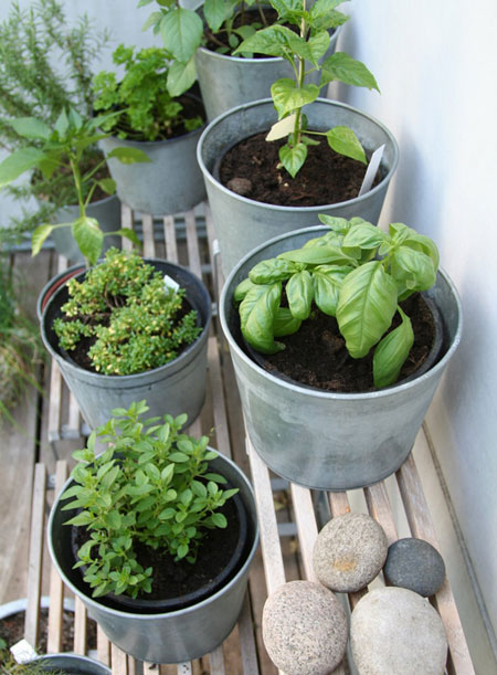 Small container garden for vegetables and herbs