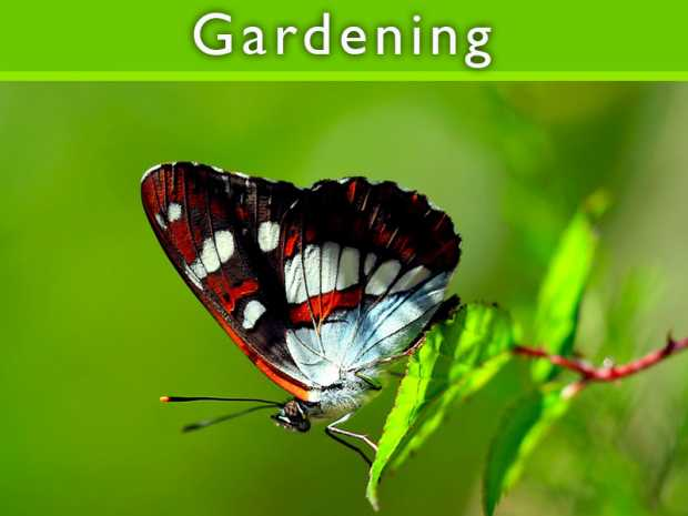 Type of Gardens: Butterfly Garden