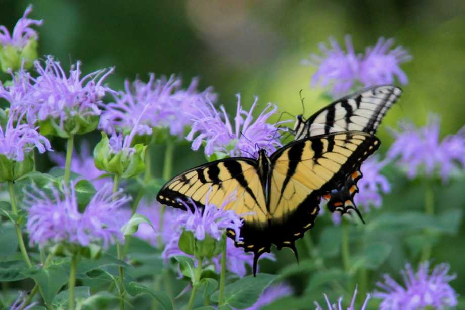 butterfly garden photography