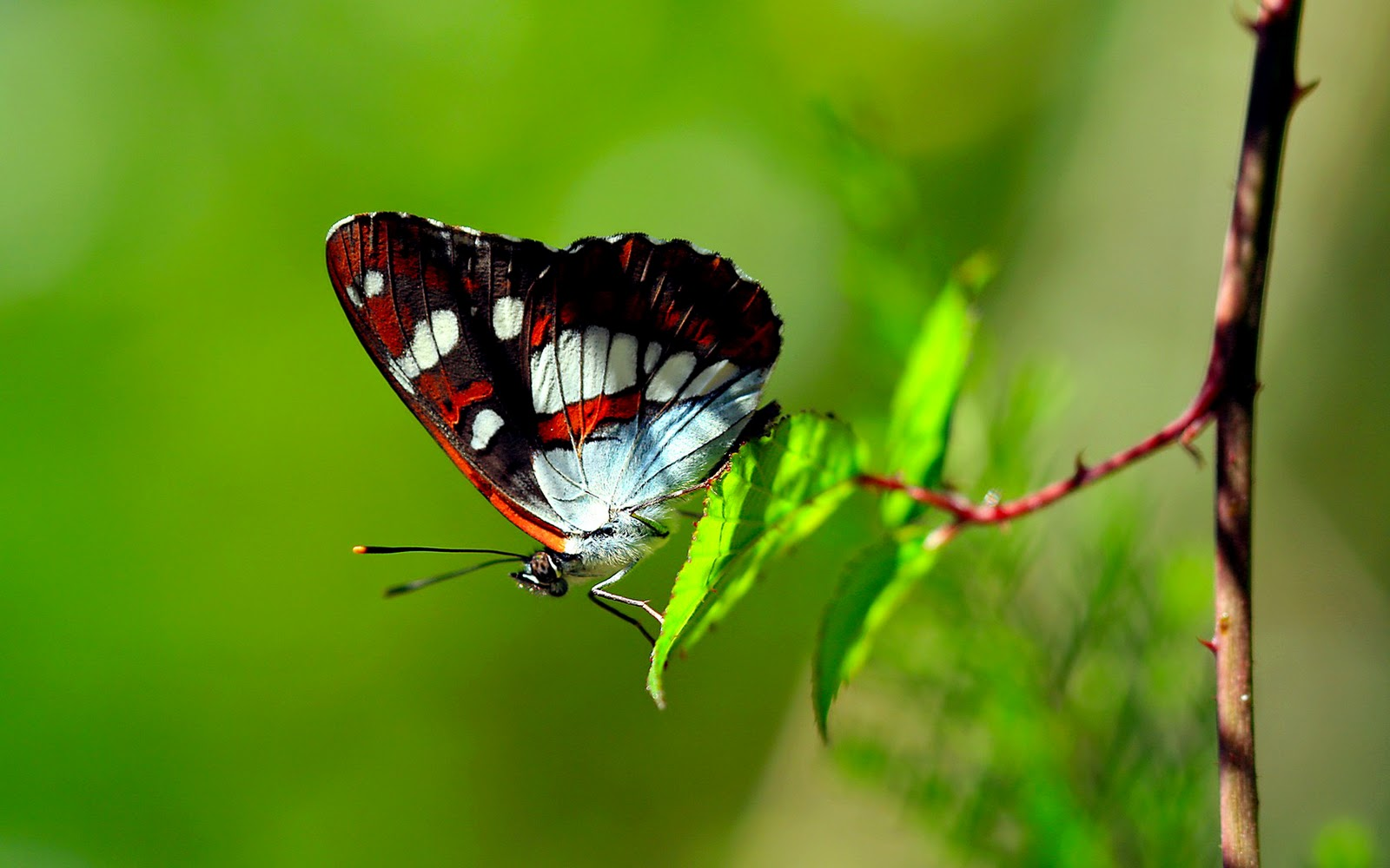 Butterfly Photography Wallpaper