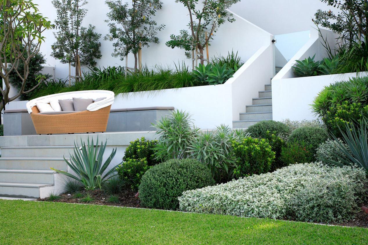 растения для сада в модерне