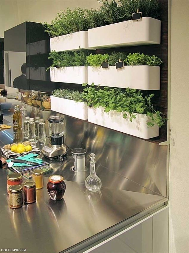 indoor-Herb-Garden kitchen