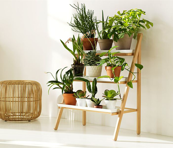 indoor plants | My Decorative