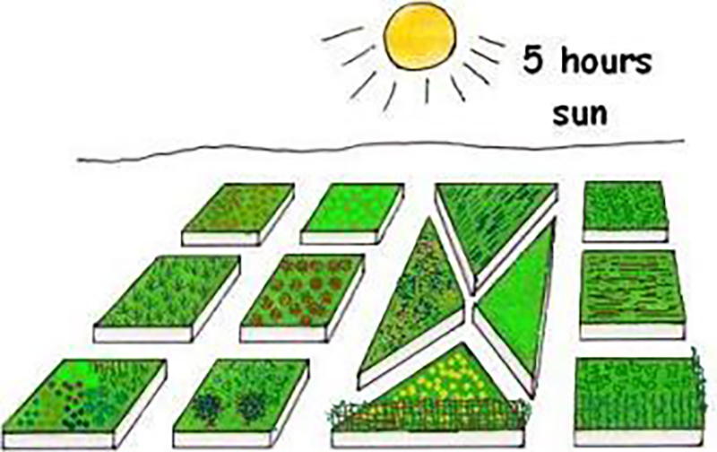 planning-a-vegetable-garden-layout