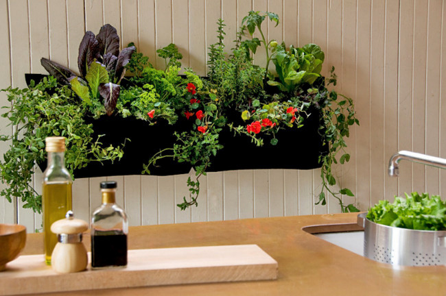 vegetabl garden for home in kitchen