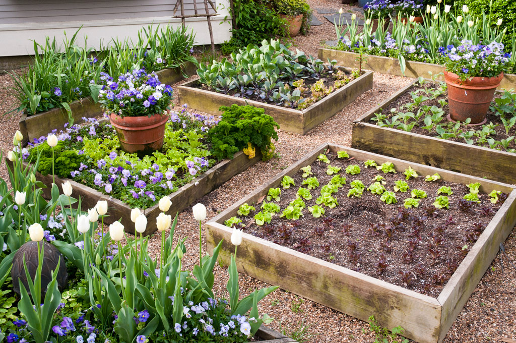 Planning basics of The Vegetable Garden My Decorative