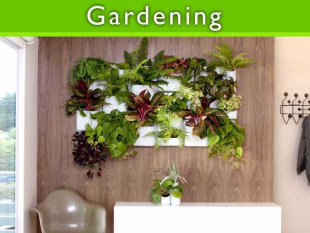 Beginning to create Indoor Gardens featured Thumb