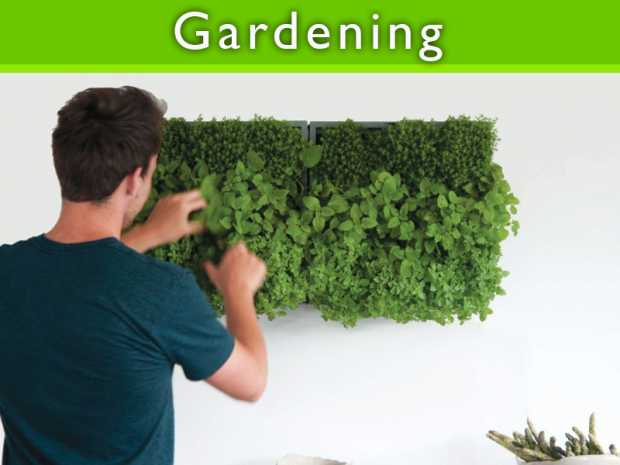 Top 8 gardening tips for urban gardens featured Thumb