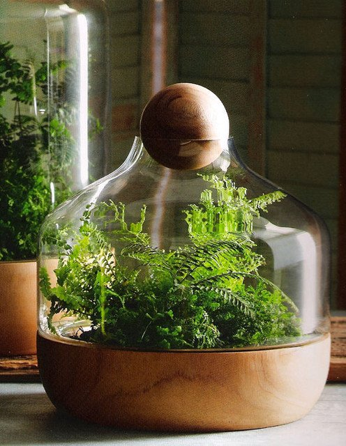 contemporary-indoor-pots-and-planters-2
