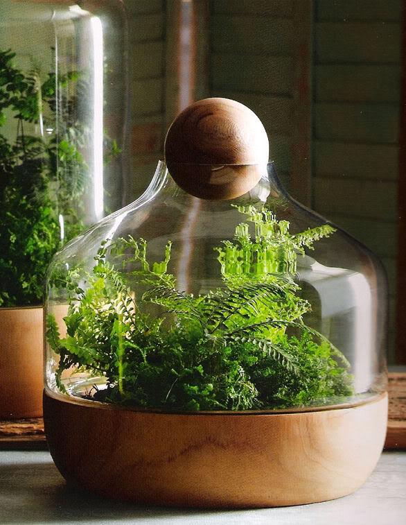 Glass Potter Plants Indoor Garden
