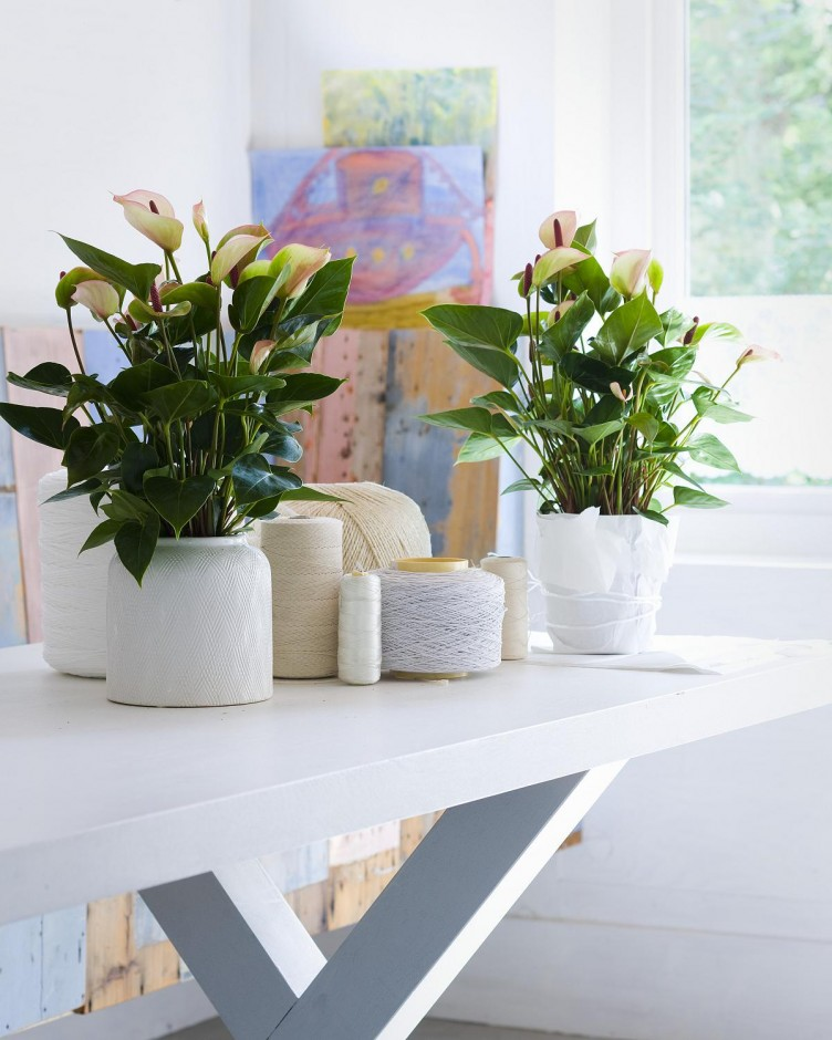 small-indoor-plants-ideas-for-modern-home-interior