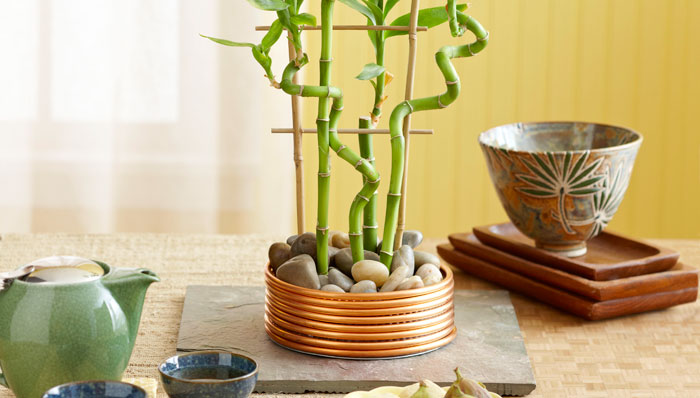 Table Top Bamboo