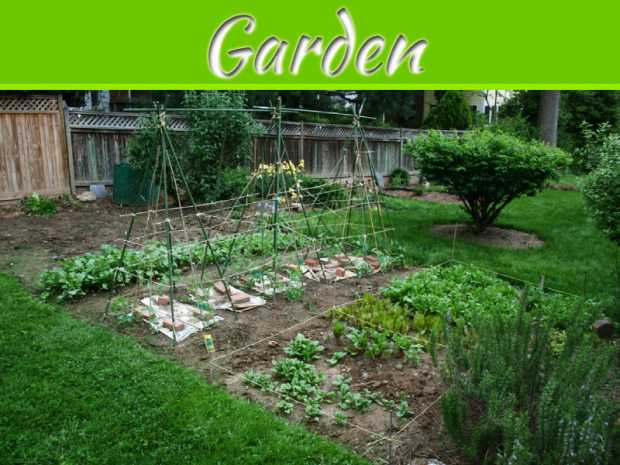 "6 Ways to Make Your Garden Go Really ""Green"""