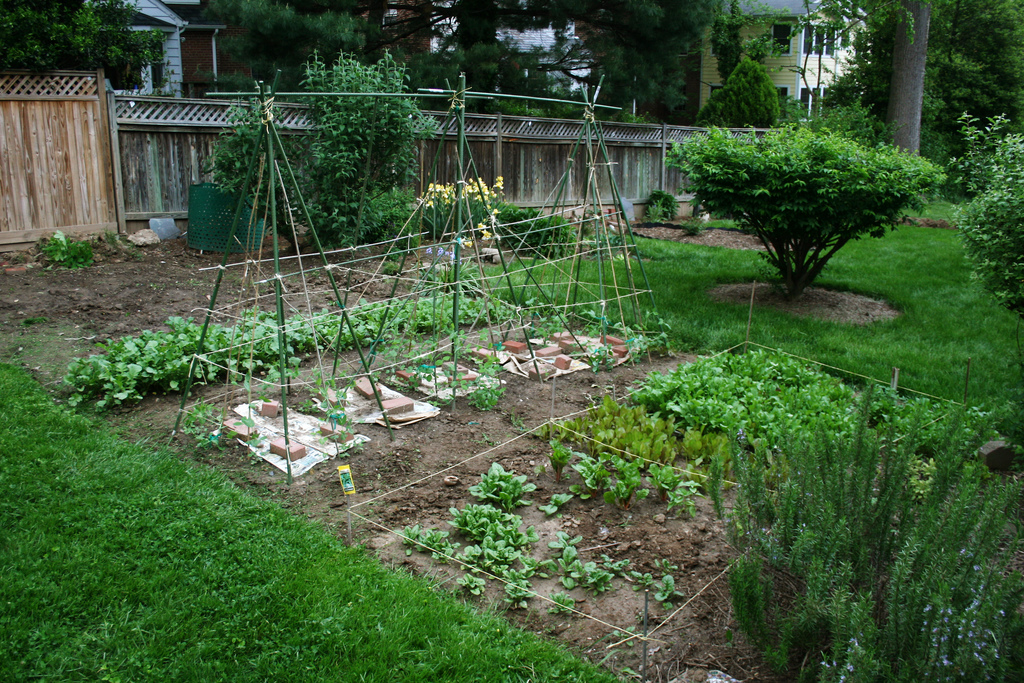 spring vegetable garden - Vegetable Garden Ideas For Spring