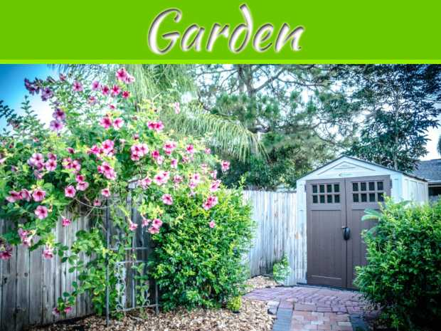 Cost-Effective Ways to Bring Your Garden Back to Life
